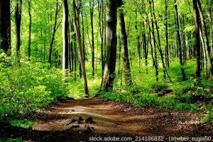 Risiken und Chancen - Bringen Sie sich mit einem Spaziergang im Wald auf positive Gedanken