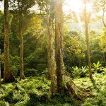 Wildnispädagogik - Du bist kein Besucher der Wildnis, sondern ein Teil von ihr